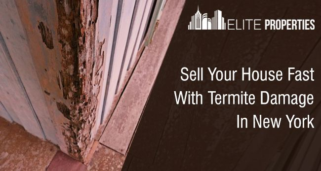 Sell Your House Fast With Termite Damage In New York